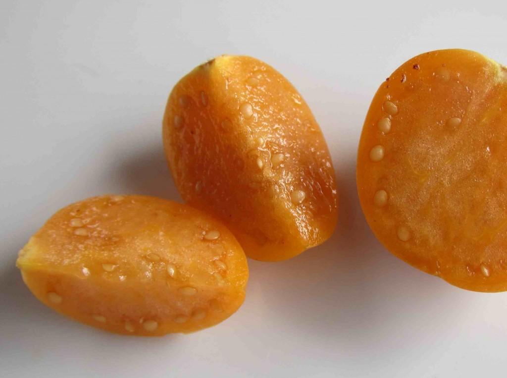 Fröna sås i krukor med vanlig såjord och gror snabbt.