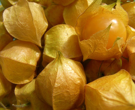 Kapkrusbäret är en syrlig och frisksmakande frukt som skyddas av sitt papperstunna skal.