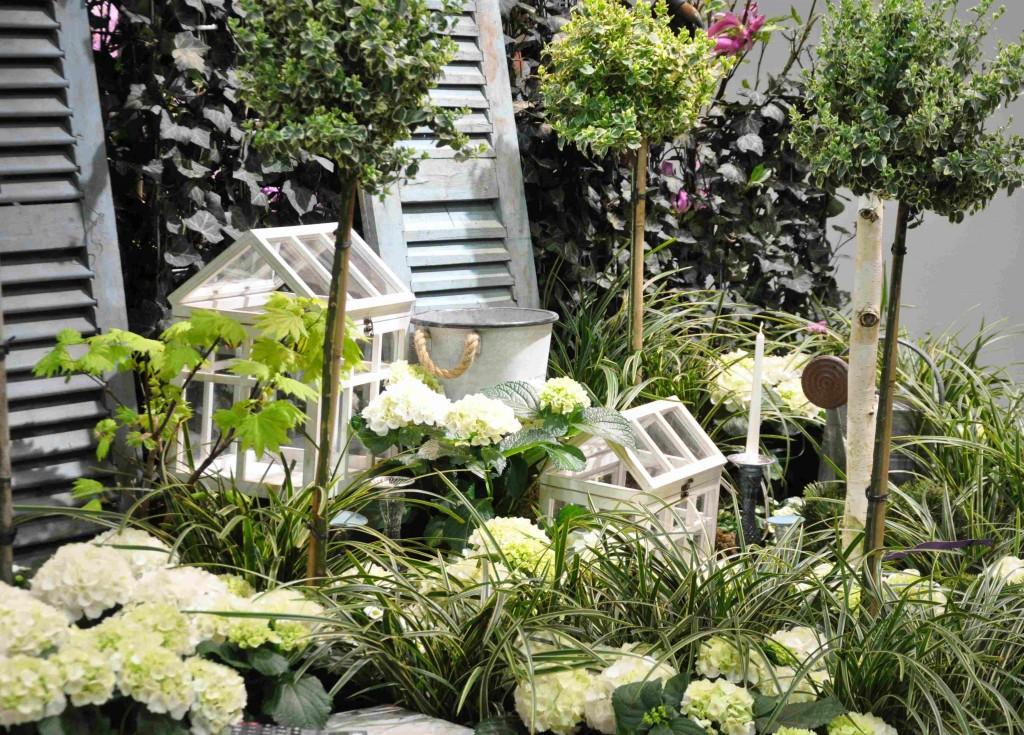 Vit hortensia smälter fint ihop med det sträva gräset japansk starr i vitt och grönt.