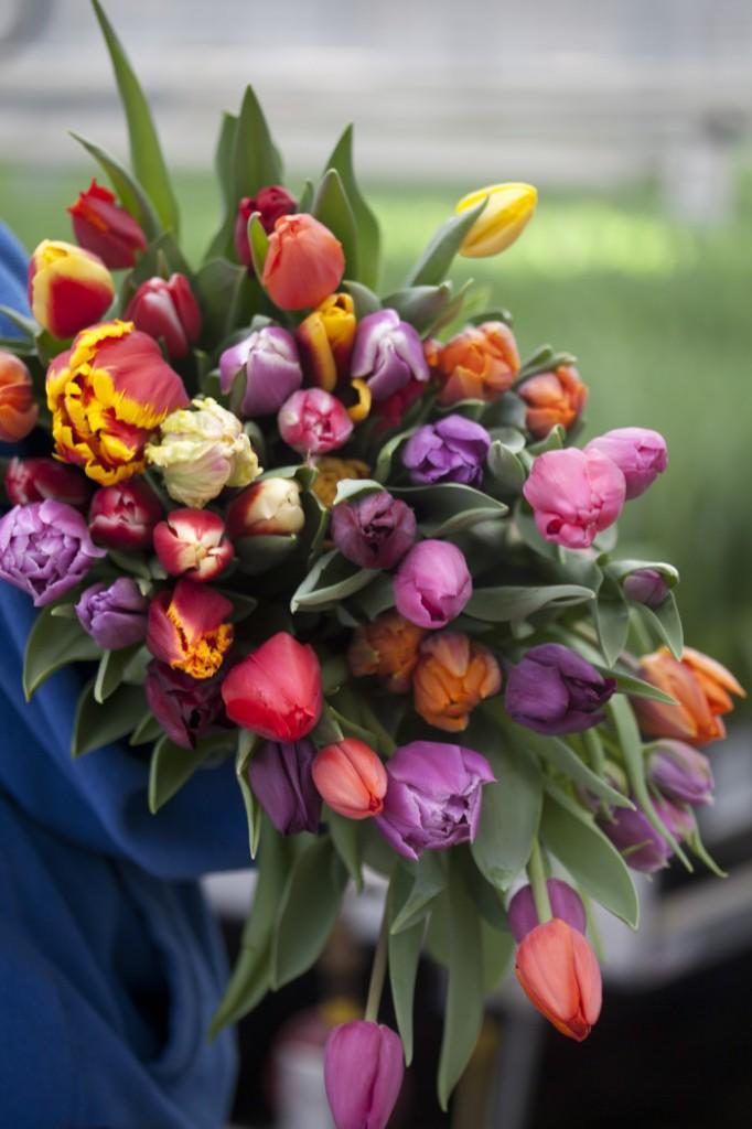 Blandbuketter med tulpaner i olika färger är härligt.
