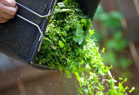 Gräsklipp är ett bra, långsamverkande gödselmedel som passar de flesta växter.