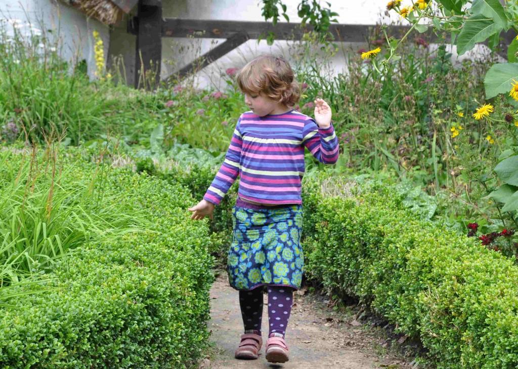 Buxbom är en tacksam växt för formklippning och låga häckar.