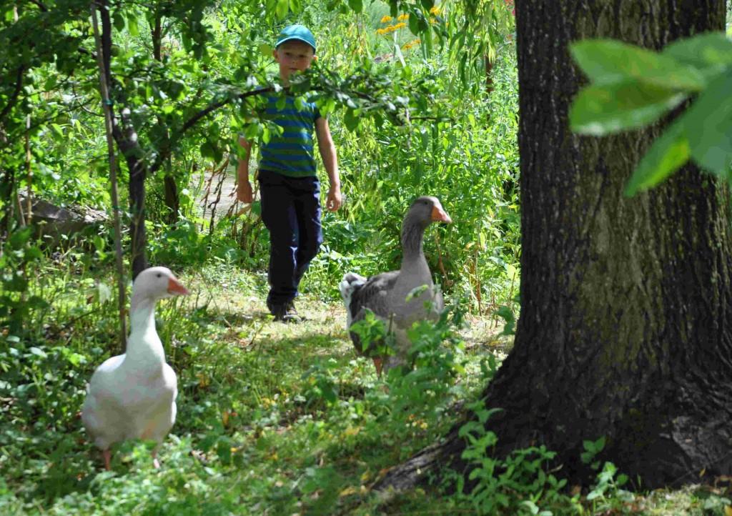 Barnvandringarna hos Mandelmanns bjuder på en rundtur bland gårdens växter och djur.