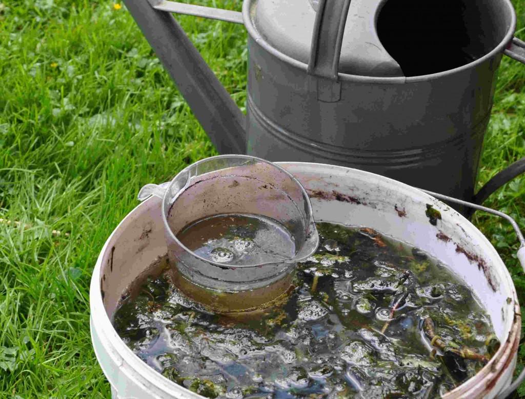 Nässelvatten är ett kraftigt gödselmedel som måste spädas ut.