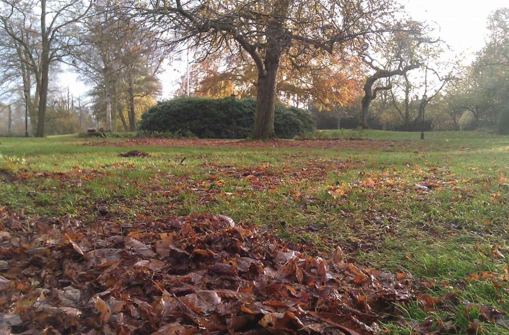 Hästkastanjens löv är stora och tunga när de blir blöta.