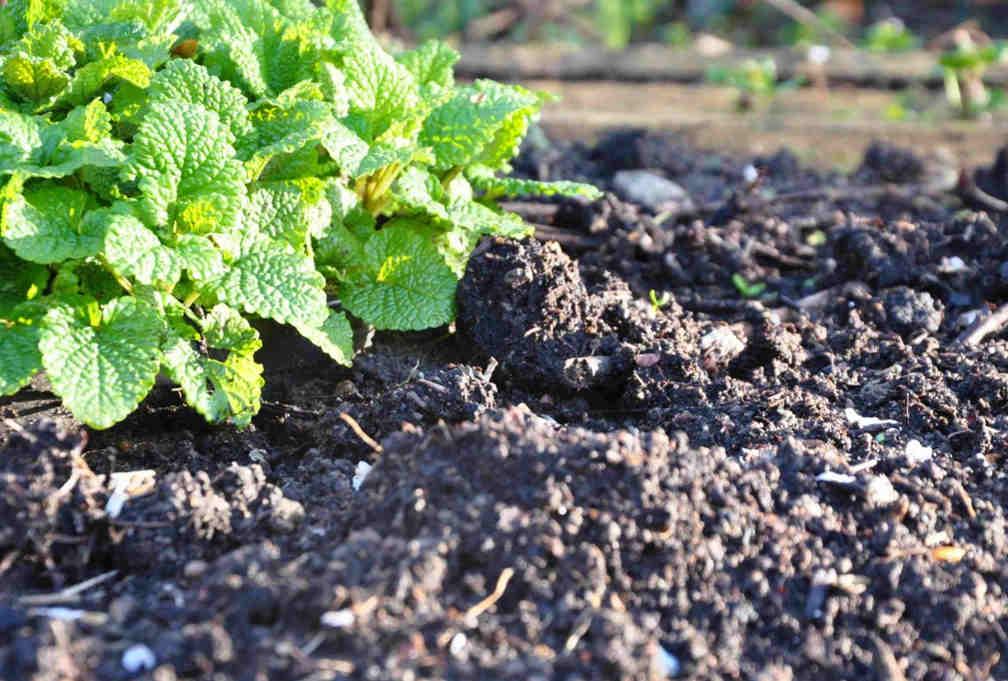 En fet och lerhaltig jord håller mycket näring.
