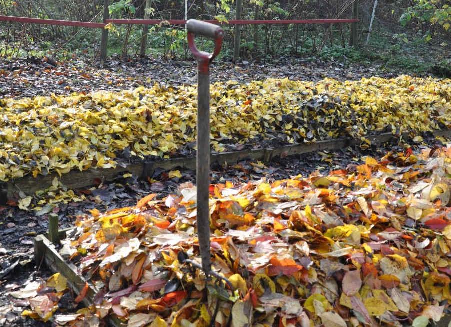 Genom att täcka odlingarna med löv över vintern ökar du mullhalten till nästa säsong.