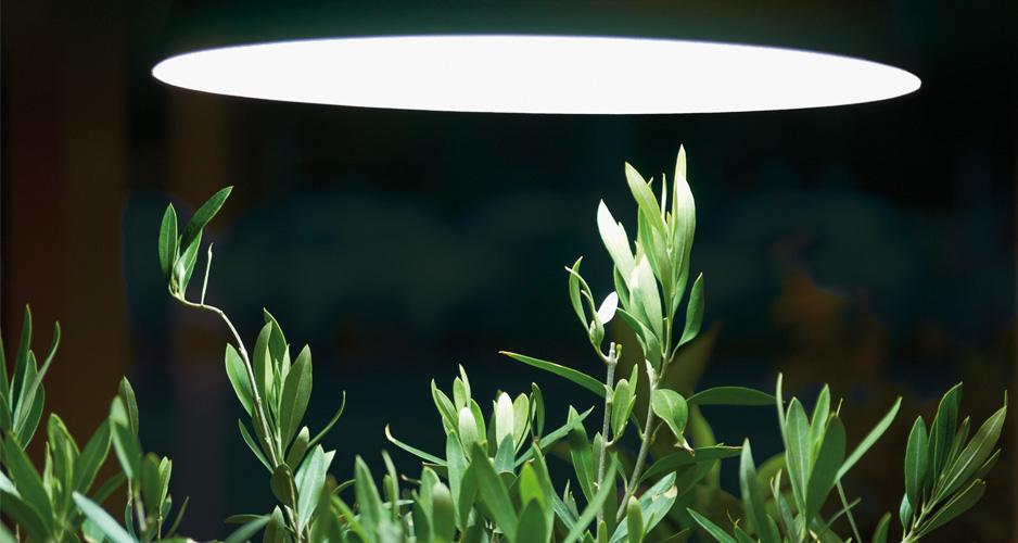 Medelhavsväxter behöver extra ljus under vintern.