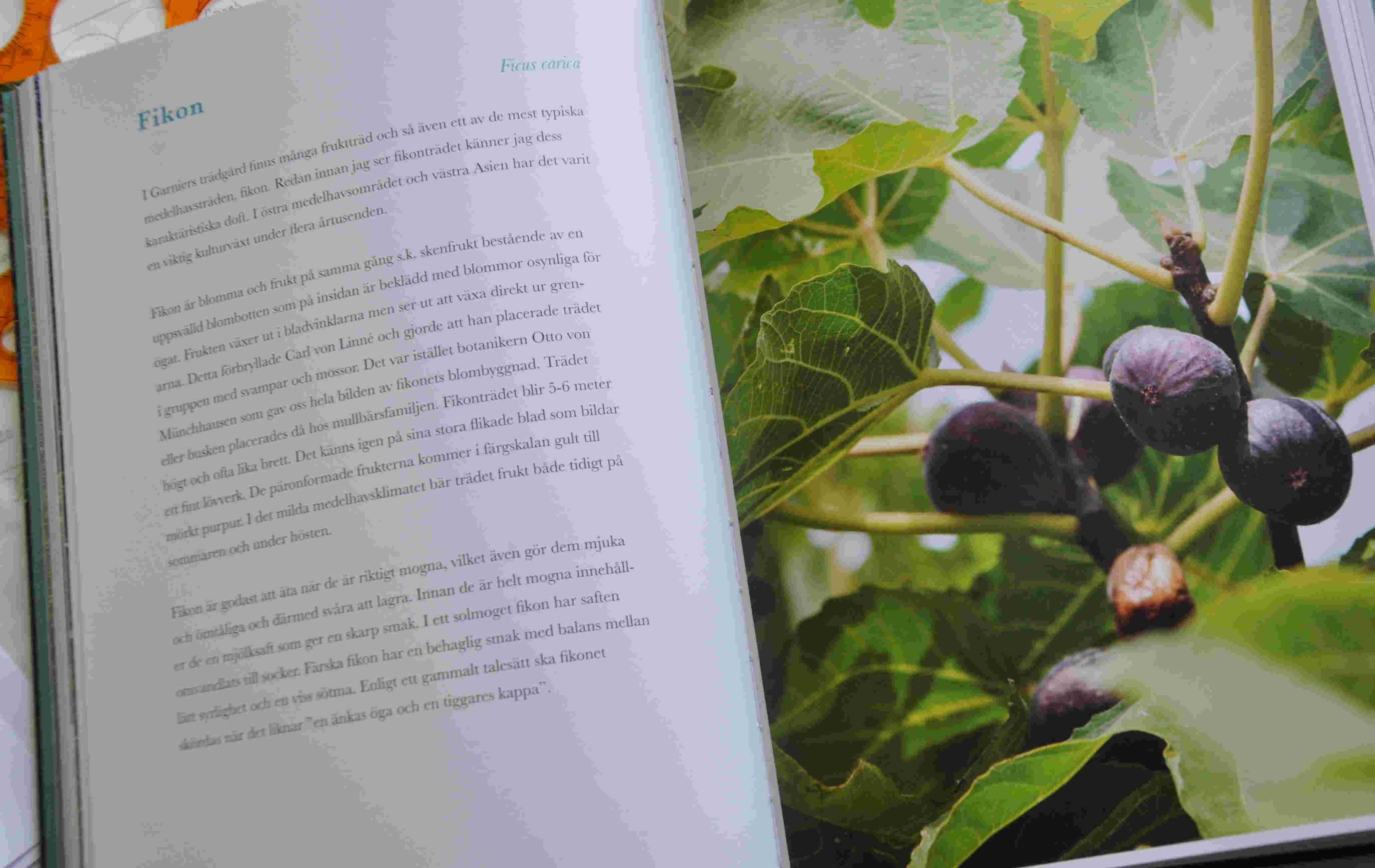 Fikon, citronträd och rosor beskrivs i text med hänsyn till ursprung och namngivning.