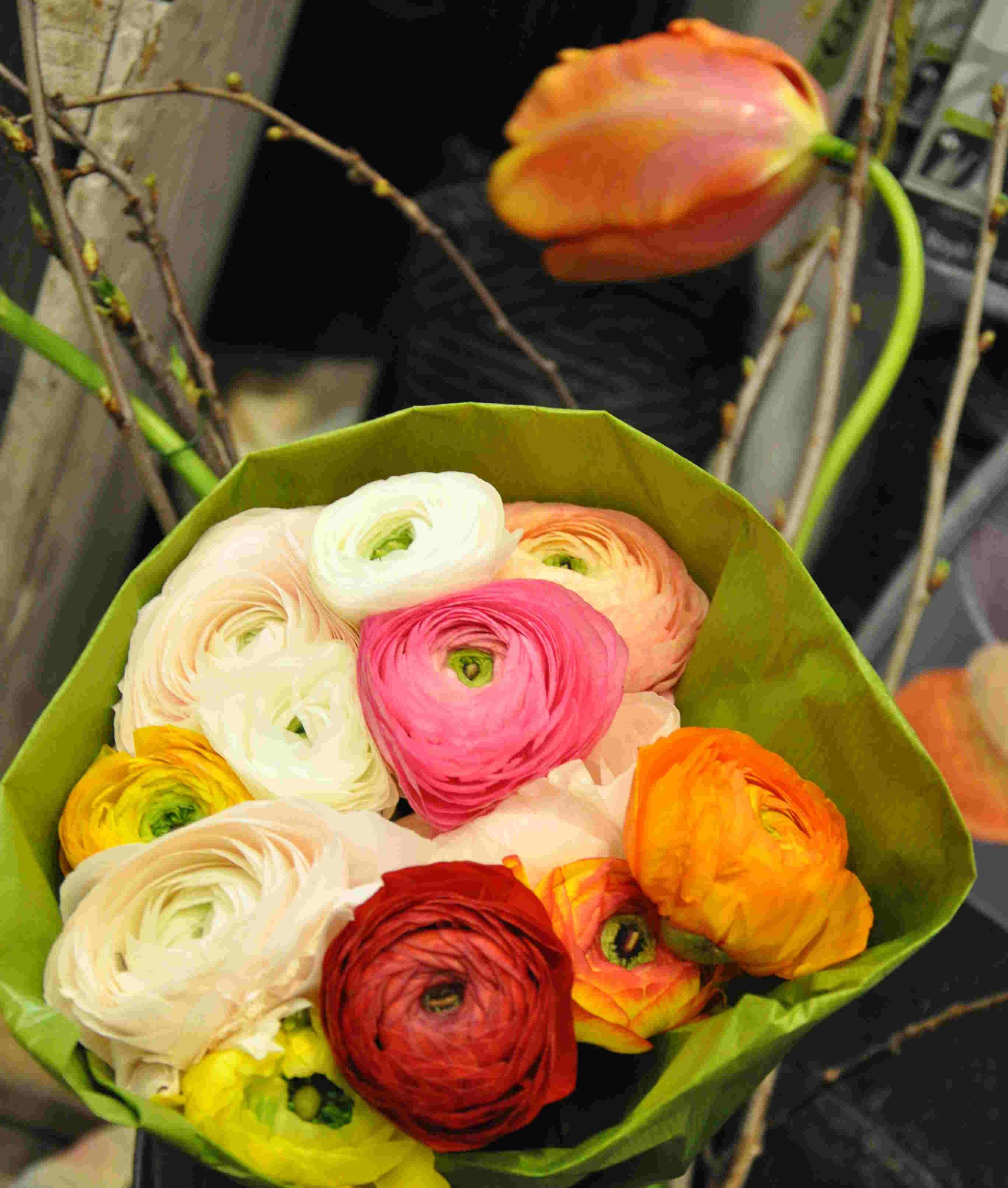 Ranunkler är en härlig vårblomma med sina silkesmjuka kronblad som sitter tätt, tätt som på en tusenbladsros.