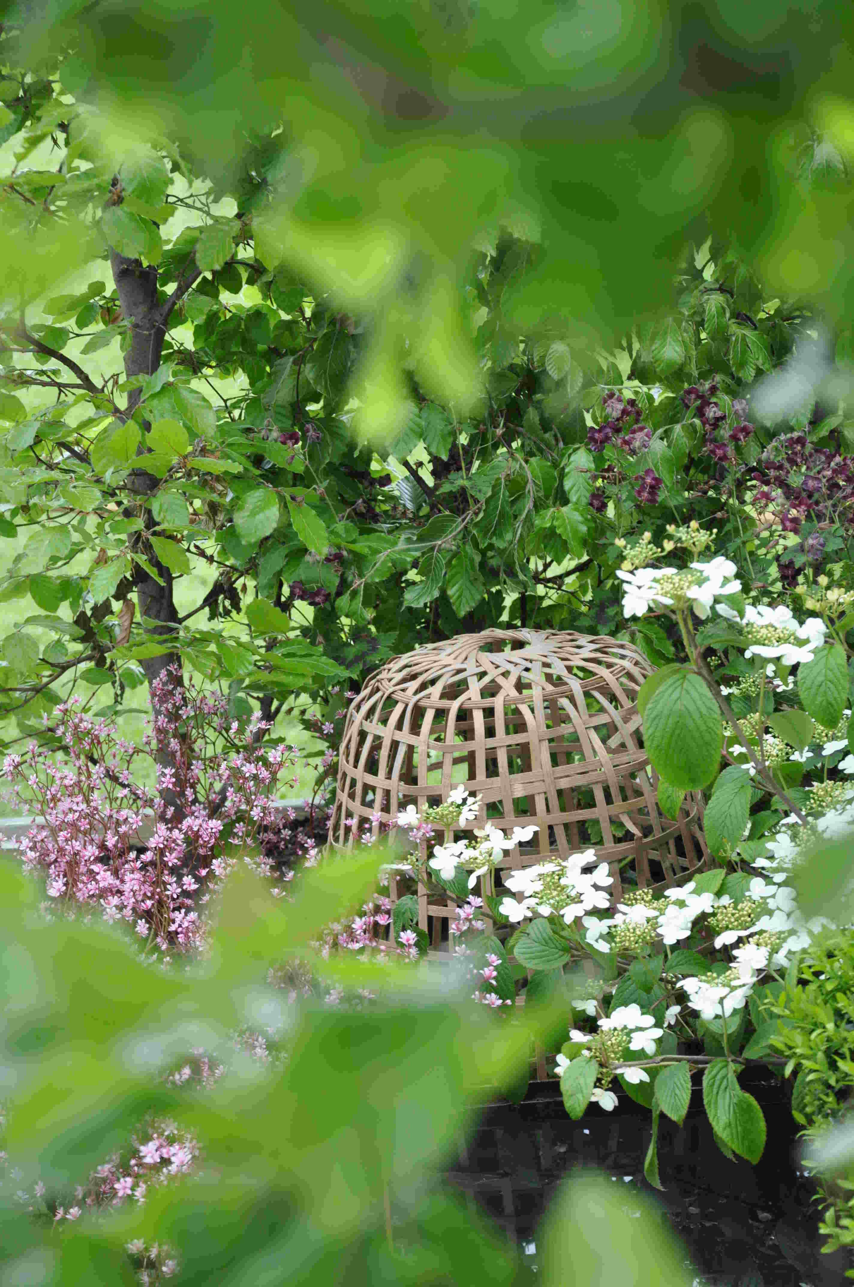 Genom grönskan tittar en bur som skyddar ömtåliga plantor.