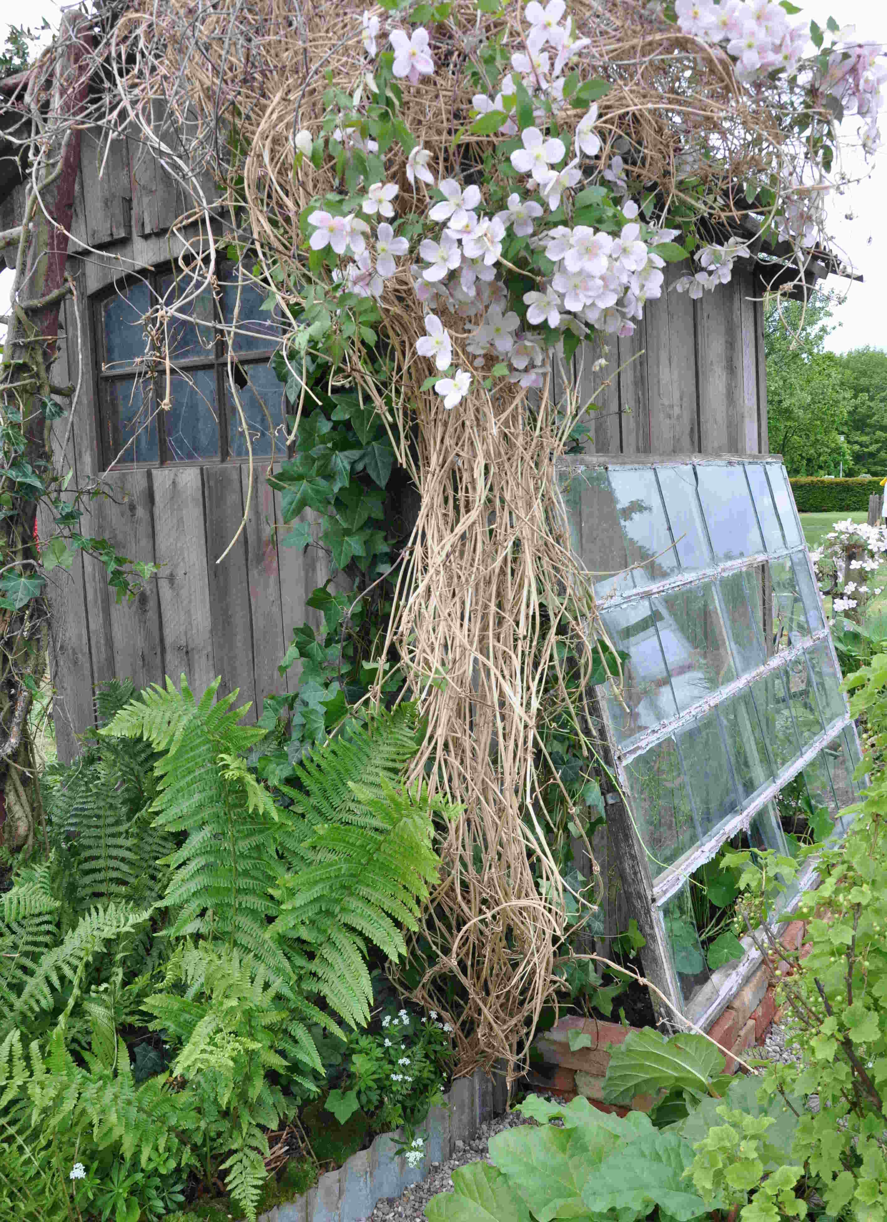Ett gammalt trädgårdsskjul står övergivet och lutar.