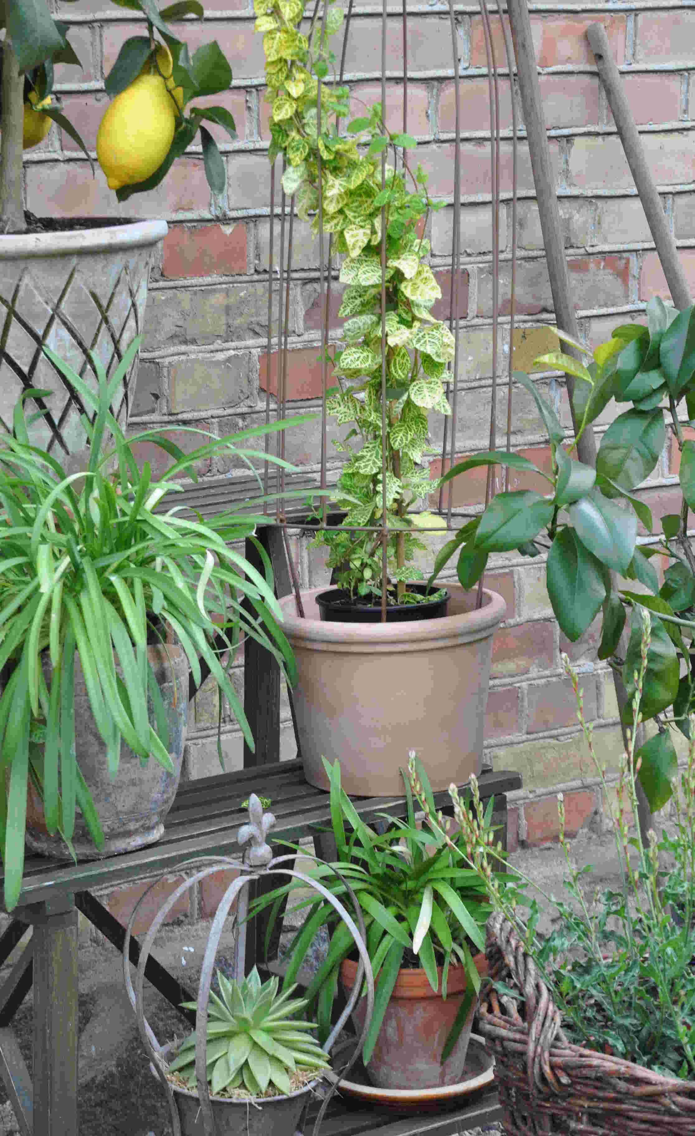 Krukodling med små och stora växter på uteplatsen.