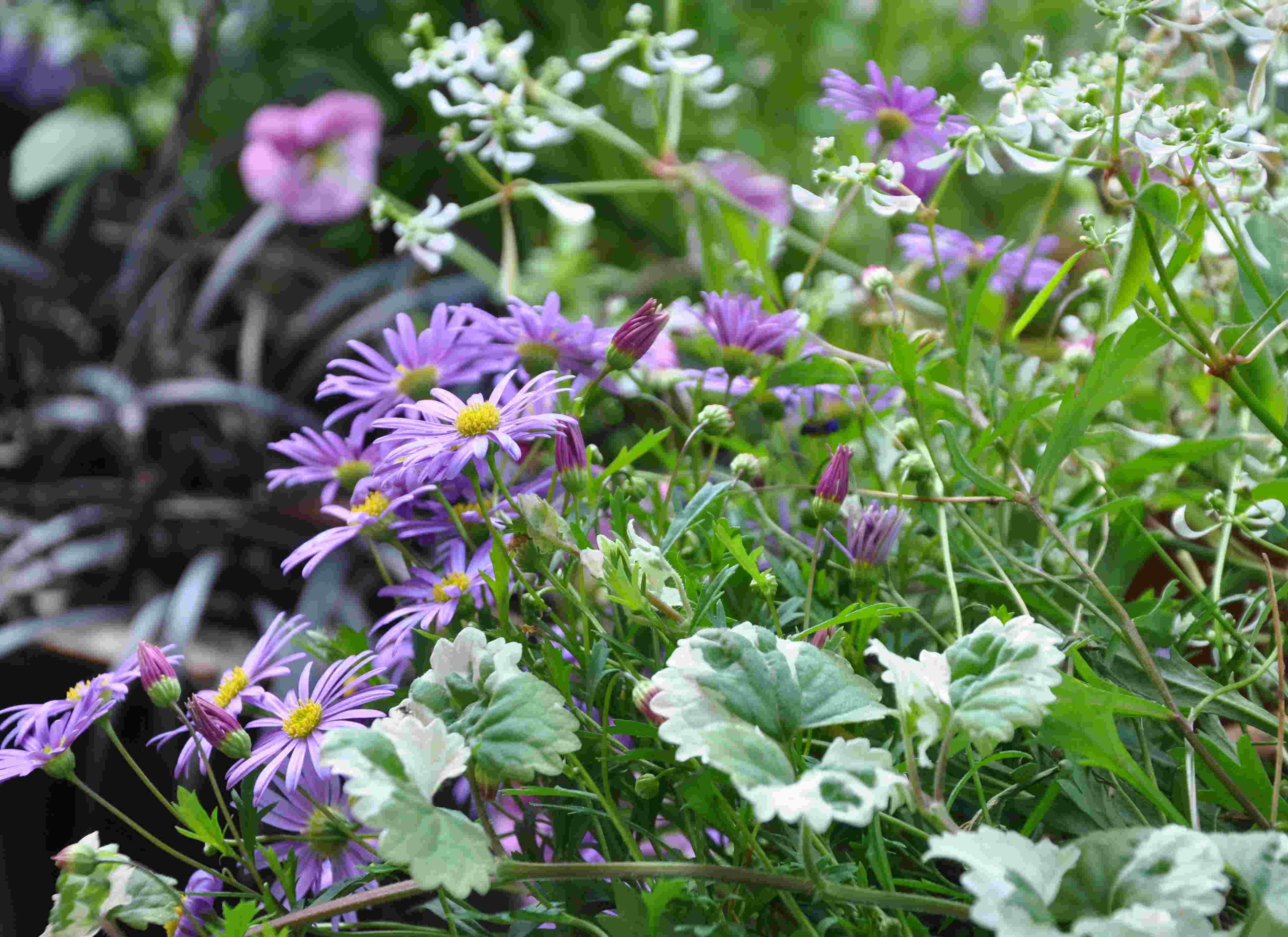 Sommarblommor i kruka ger snabb grönska och långvarig blomning.