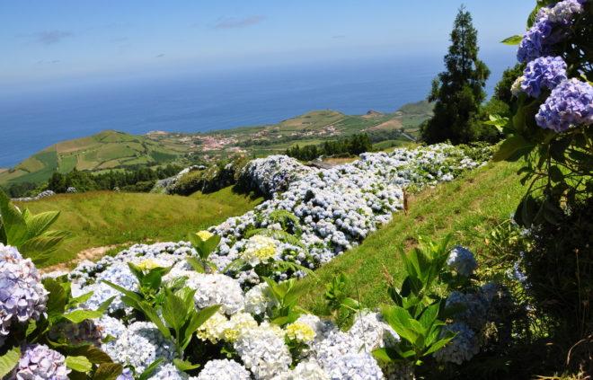 blommande buskar i rabatt